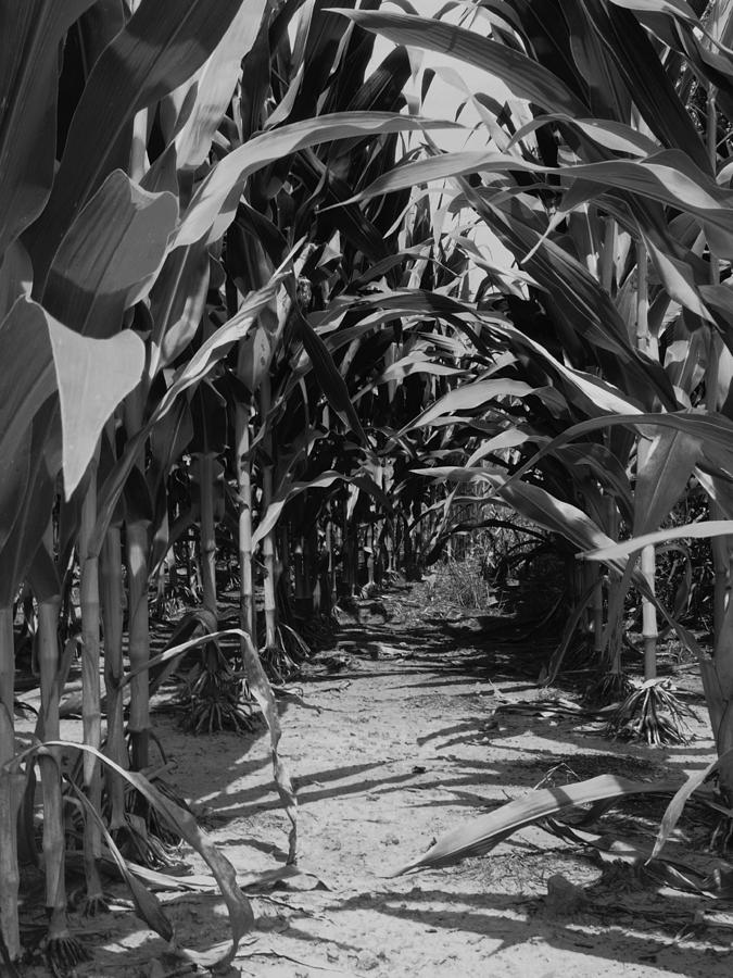 Corn Photograph - Corn by Jeff Montgomery