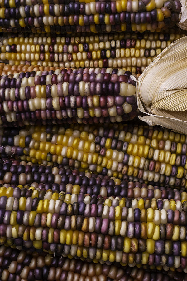 Indian Photograph - Corn Kernals by Garry Gay