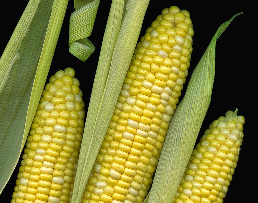 Corn Photograph - Corn On The Cob I  by Tom Mc Nemar