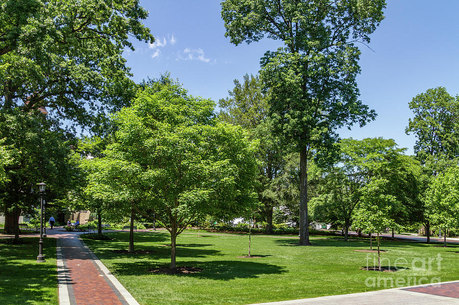 Vu Photograph - Corr Hall Green Space by William Norton