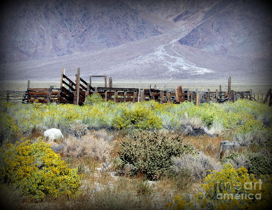 Corral Photograph - Corral in the middle of nowhere by Joy Patzner