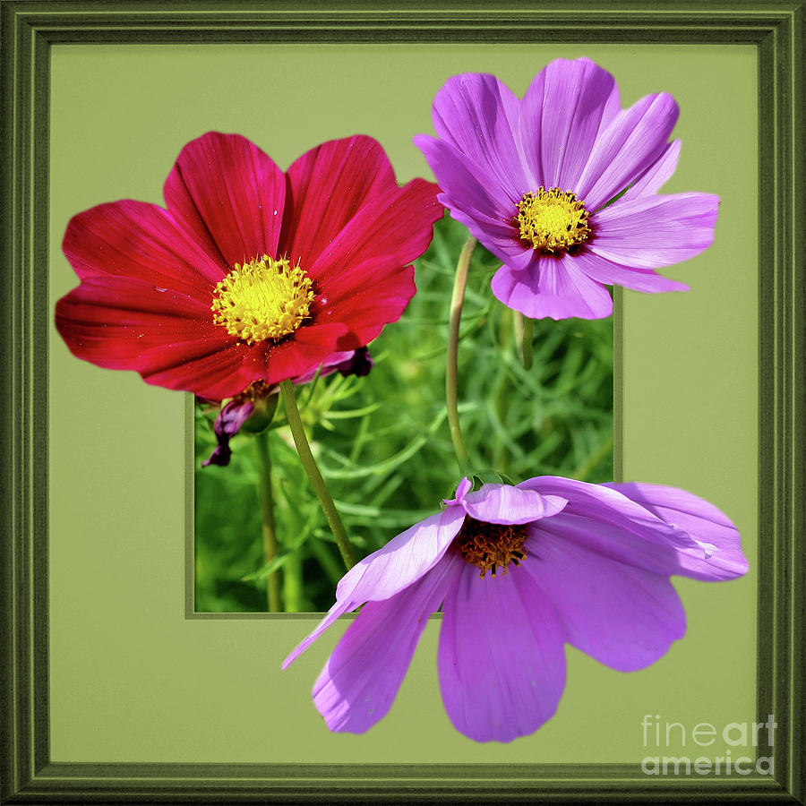 Cosmos Flower Peeking Out by Smilin Eyes  Treasures