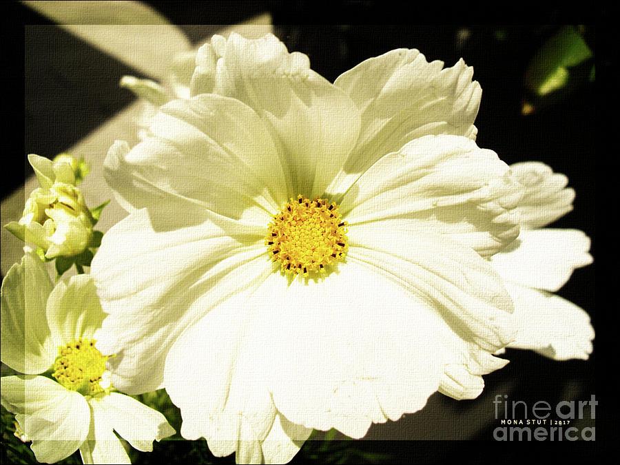 Cosmos Sun Flowers Photograph
