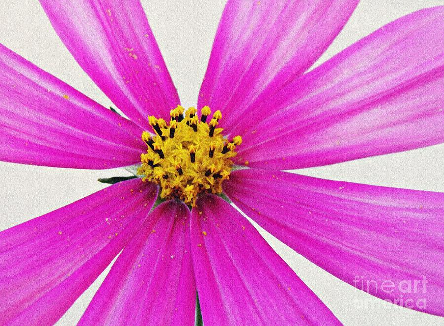 Cosmos Textured Photograph