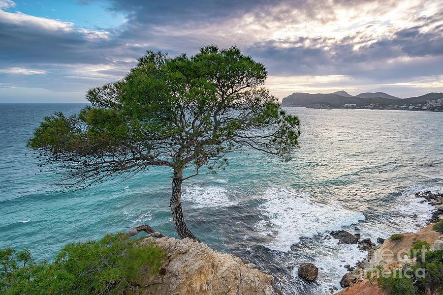 Costa de la Calma Tree by Hans- Juergen Leschmann