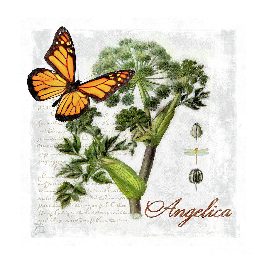 Cottage Style Angelica Herb Butterfly Botanical