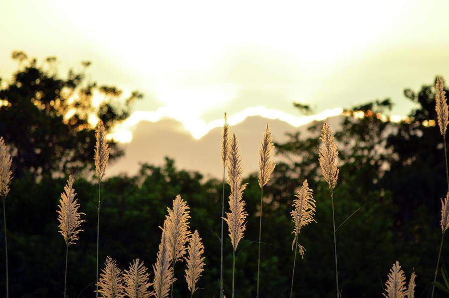 Cypress Photograph - Cotton Candy Sunset 2 by Ken Figurski