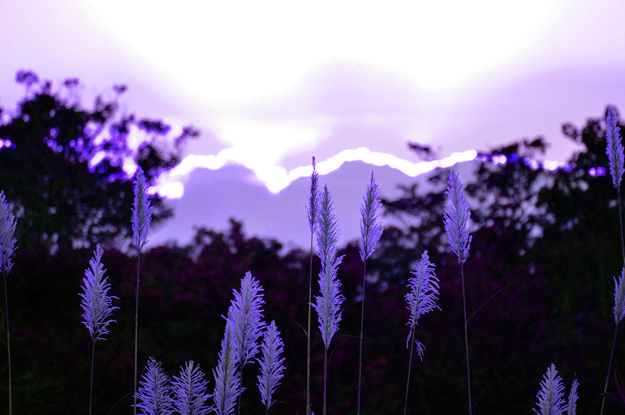 Cypress Photograph - Cotton Candy Sunset 3 by Ken Figurski