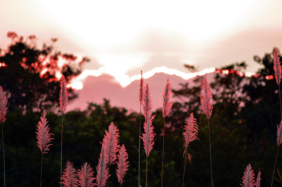 Cypress Photograph - Cotton Candy Sunset 4 by Ken Figurski