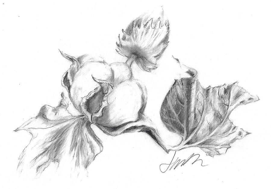Graphite Pencil Drawing Drawing - Cotton Harvest by Jacki Kellum