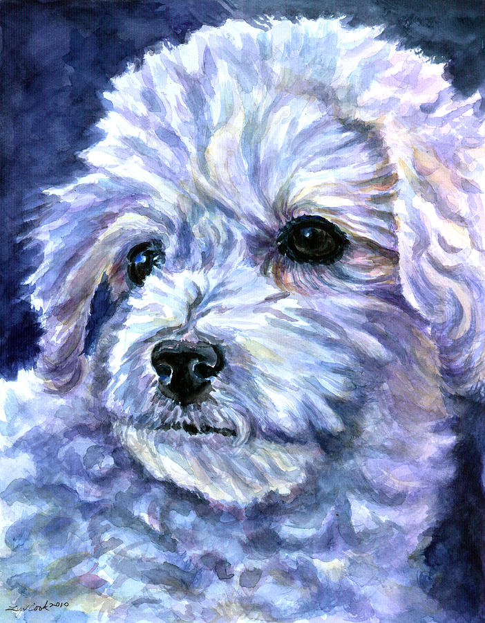 Bichon Frise Painting - Cotton Top by Lyn Cook