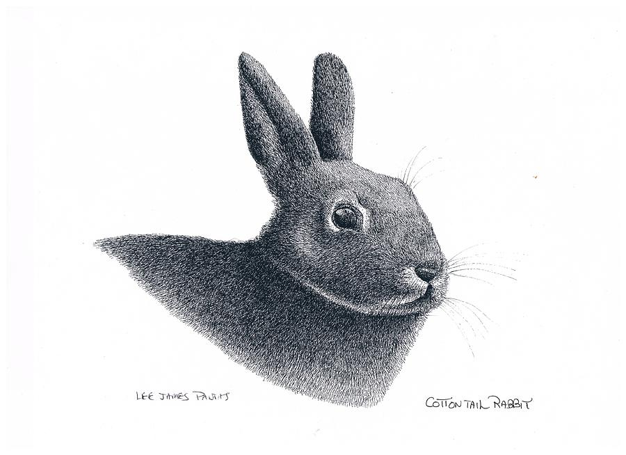 Rabbit Drawing - Eastern Cottontail Rabbit by Lee Pantas