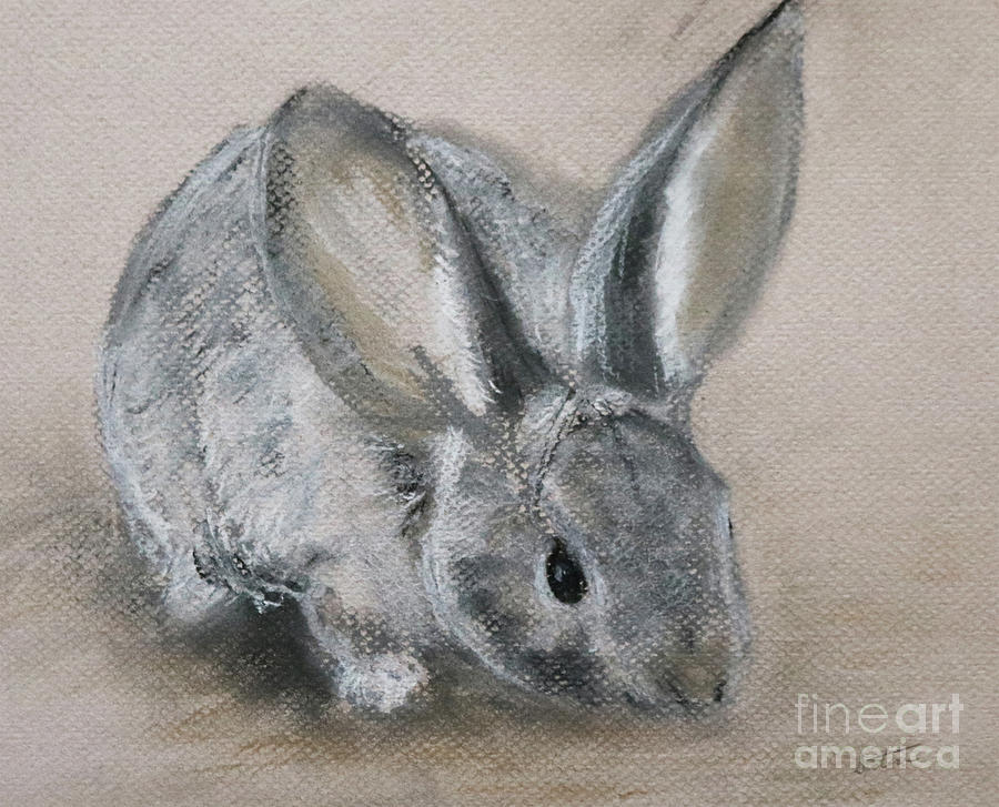 Cottontail Pastel - Cottontail Rabbit by Stephanie Peters