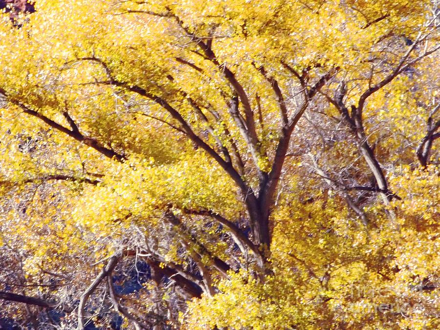 Cottonwood Golden Leaves Digital Art by Annie Gibbons