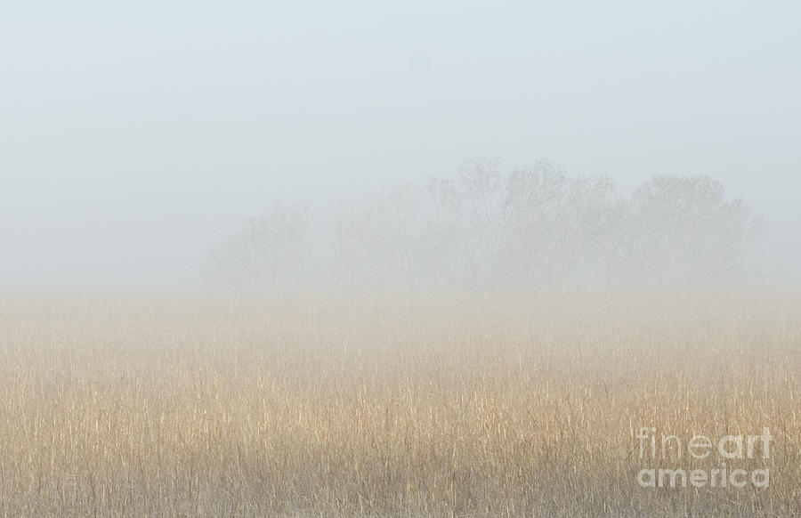 Kansas Photograph - Cottonwood Trees In Fog by Fred Lassmann