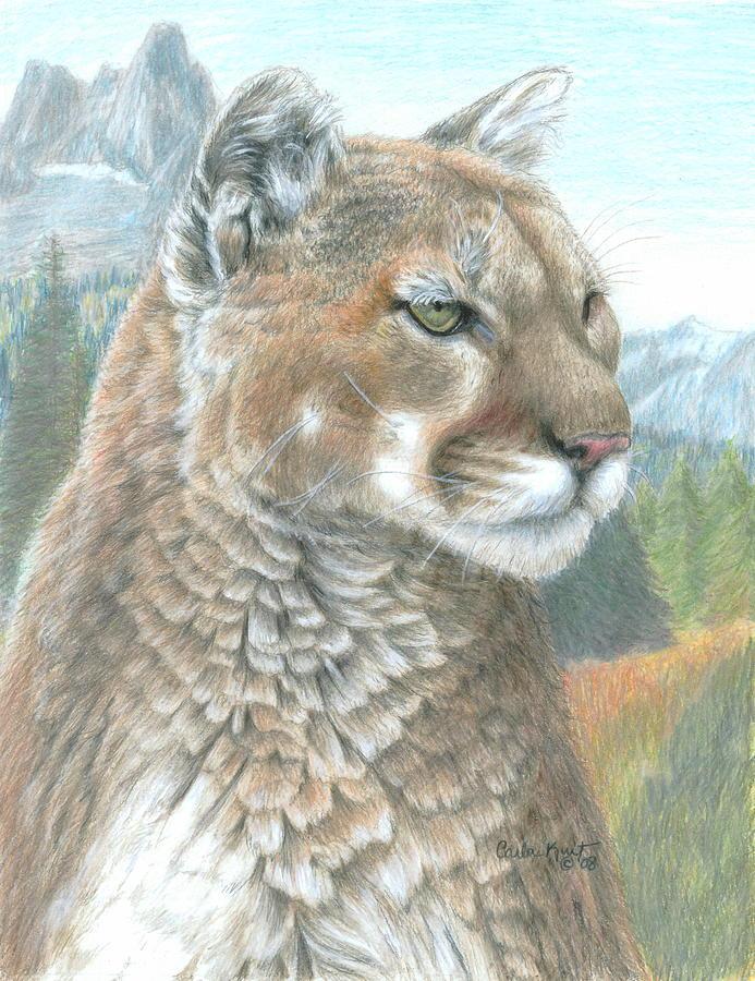 Cougar Drawing - Cougar 2 by Carla Kurt