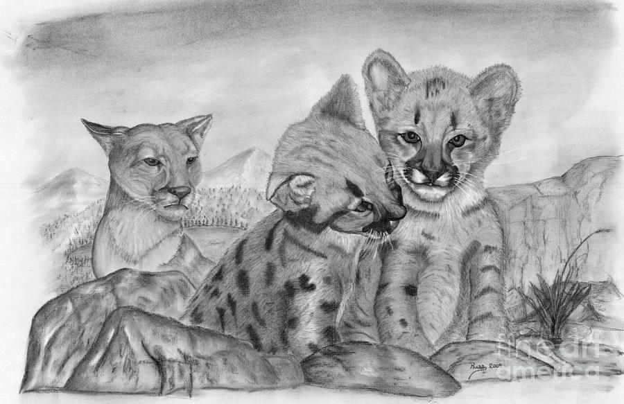 Cougar Drawing - Cougar As She Watches Her Cubs by Russ  Smith