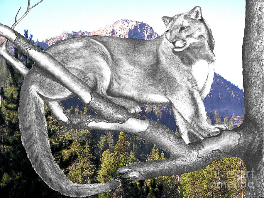 Photo Manipulation Photograph - Cougar Mountain by Russ  Smith