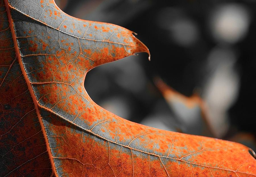 Cougar Rusty Leaf Detail Photograph