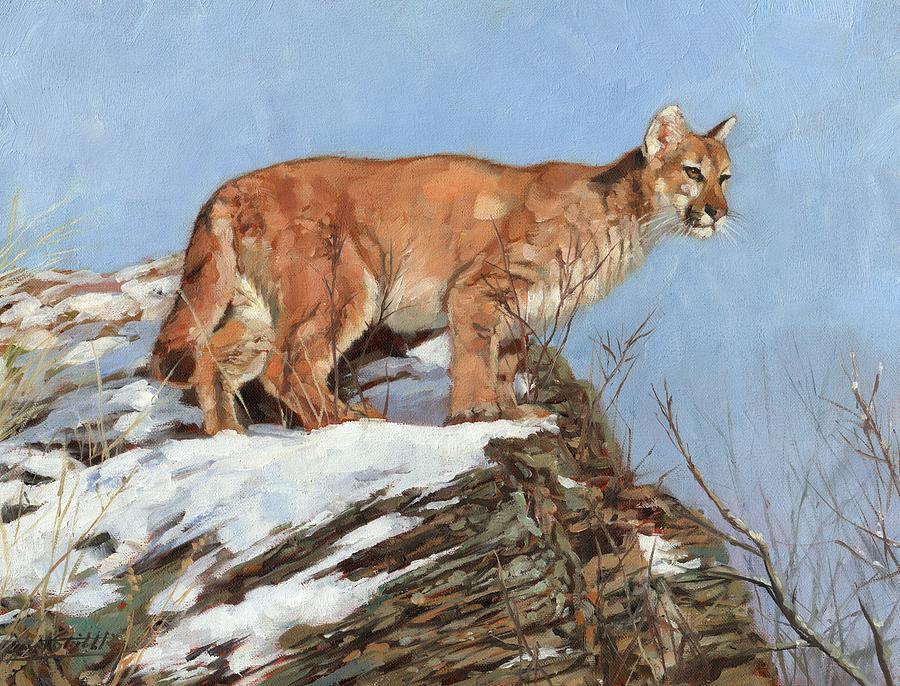 Cougar, Snowy Ridge by David Stribbling