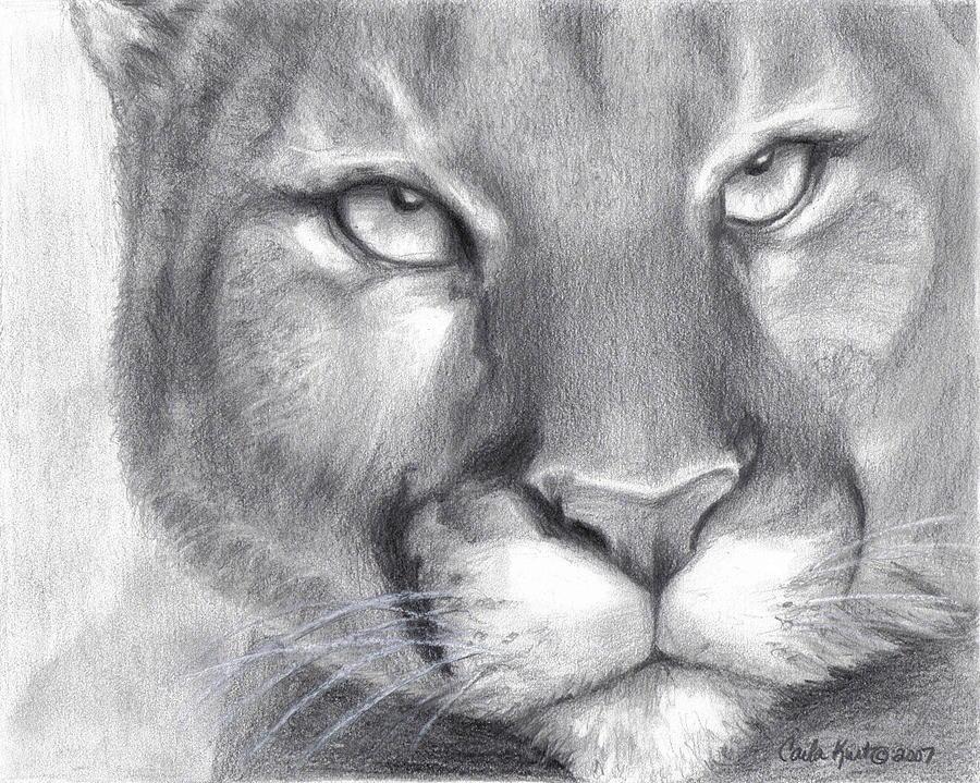 Cougar Drawing - Cougar Spirit by Carla Kurt