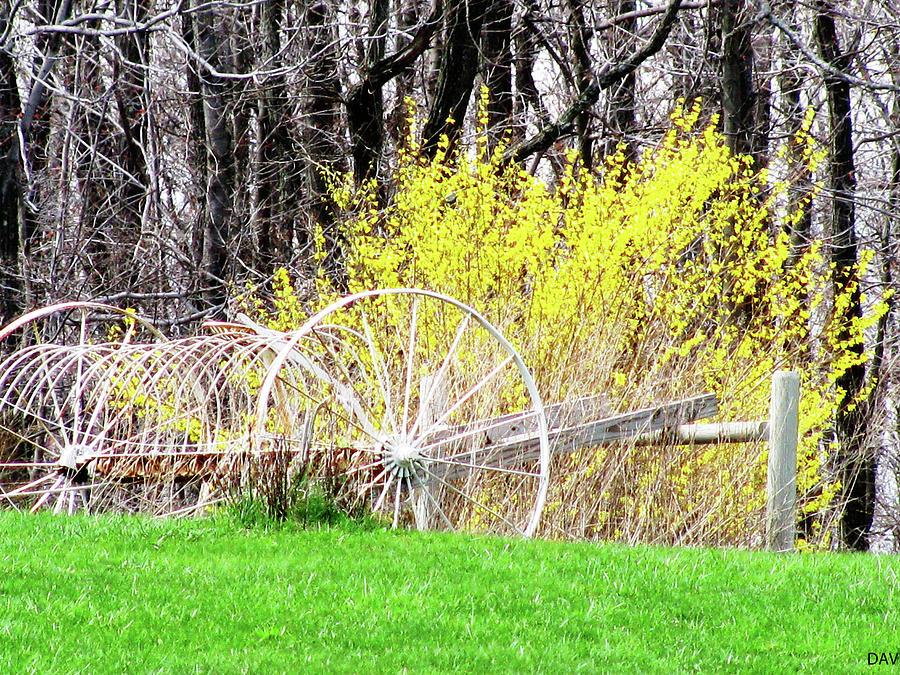 Countrified Spring Photograph - Countrified Spring by Debra     Vatalaro