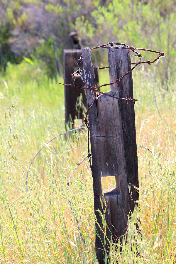 Country Landscape Photograph - Country Fence by Stephanie Moses