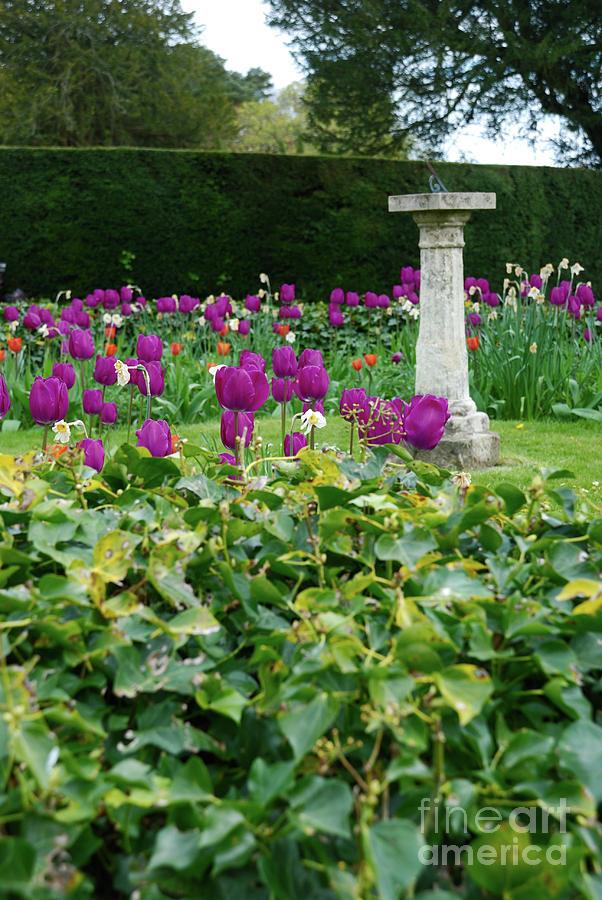 Sundial Photograph - Country Garden by Richard Gibb