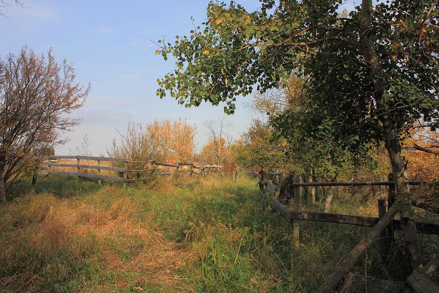Farm Photograph - Country Lane by Jim Sauchyn