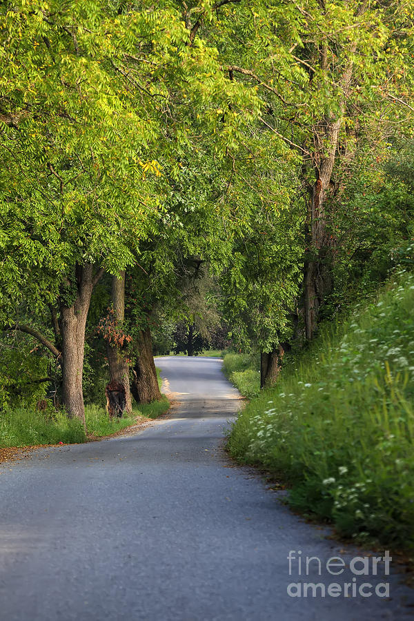 Trees Photograph - Country Lane by Rick Mann