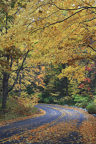 Fall Photograph - Country Road Harriman State Park New York by Mike Malandra