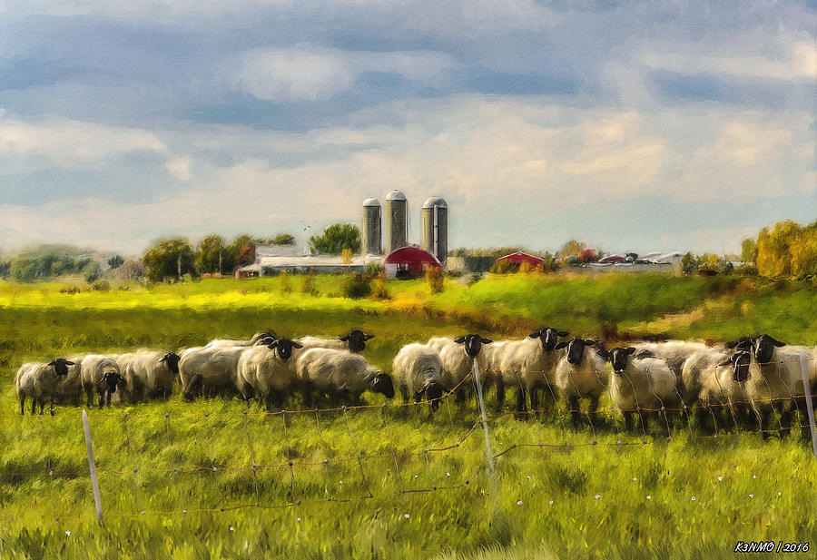 Sheep Photograph - Country Sheep by Ken Morris