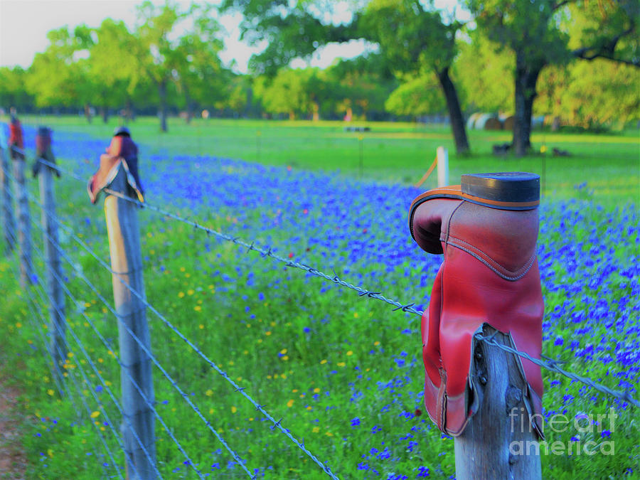 Texas Photograph - Country Western Blue Bonnets by Third Eye Perspectives Photographic Fine Art