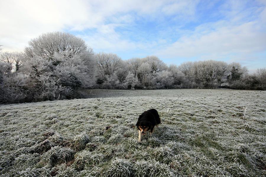 Lassie Photograph - County Clare Lassie by John Quinn