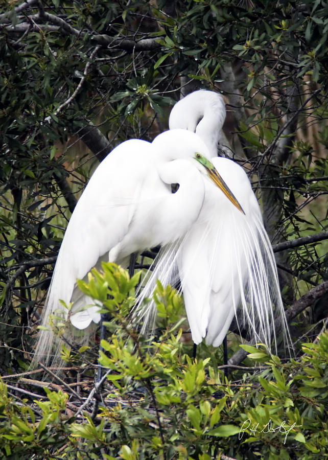 Beaufort County Photograph - Courting by Phill Doherty