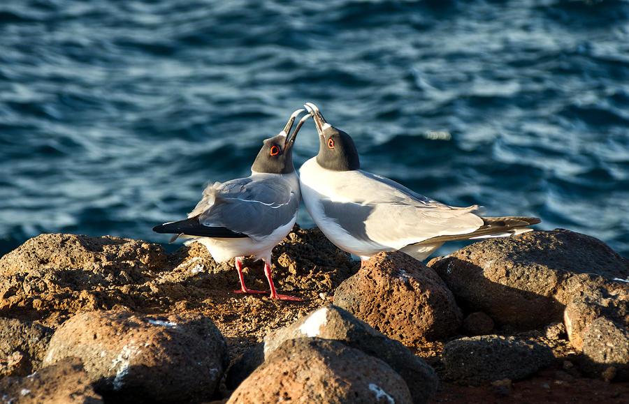 Bird Photograph - Courtship Conversation by Jane Selverstone
