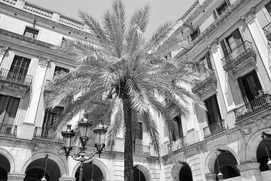 Courtyard Photograph - Courtyard Palm by David Coleman