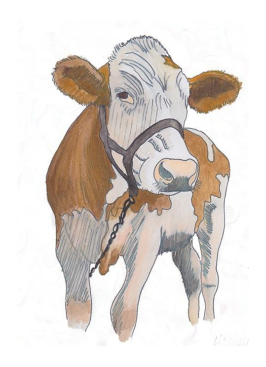 Cow Drawing - cow by Amanda Mitchell