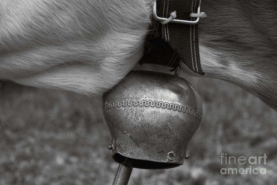 Cows Photograph - Cow Bell by Dania Reichmuth