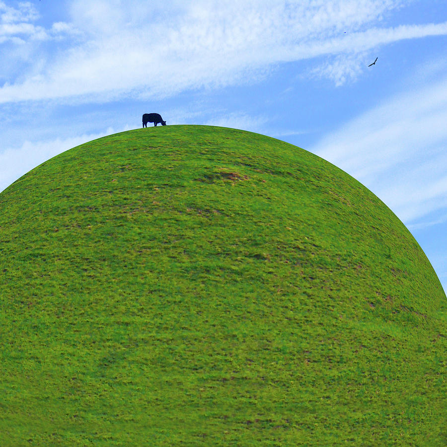 Black Cow Photograph - Cow Eating On Round Top Hill by Mike McGlothlen