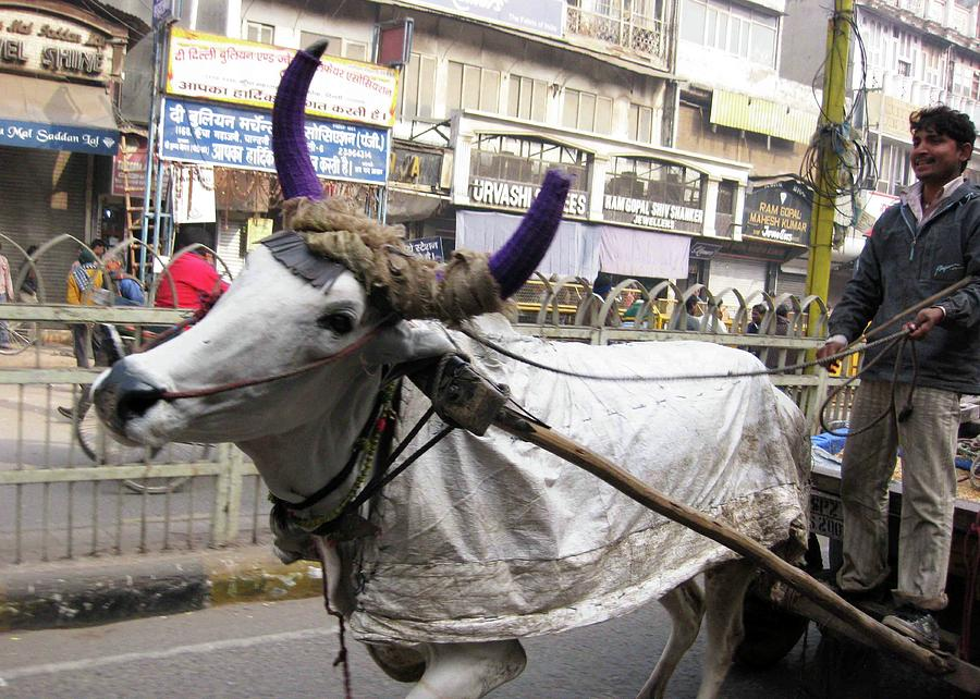 Old Delhi Photograph - Cow Pulling Cart by David L Griffin