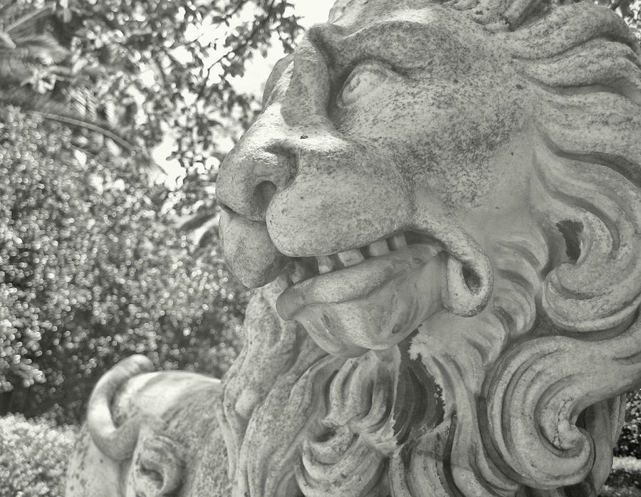 Marble Photograph - Cowardly Lion by JAMART Photography