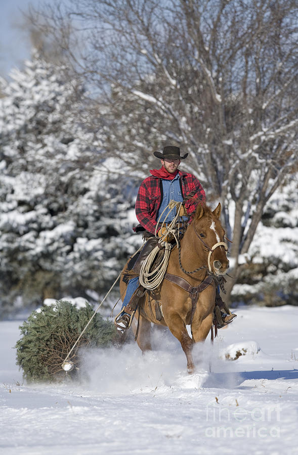 Cowboy Christmas Photograph By Carol Walker