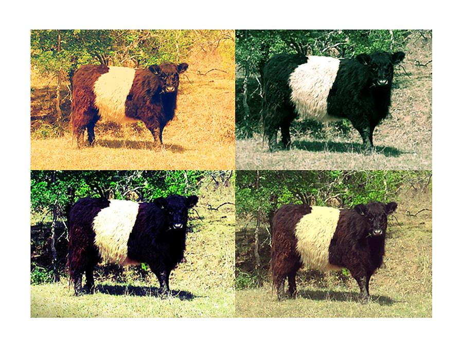 Cows Photograph by Joanne Elizabeth