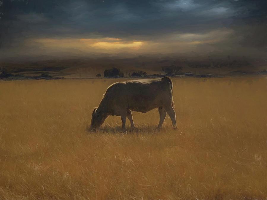 Cows Life Photograph