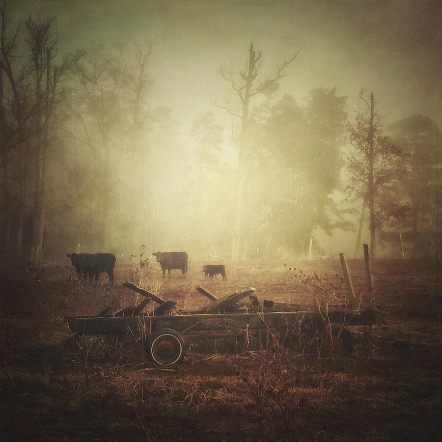 Cows, Wagon, Fog by Melissa D Johnston