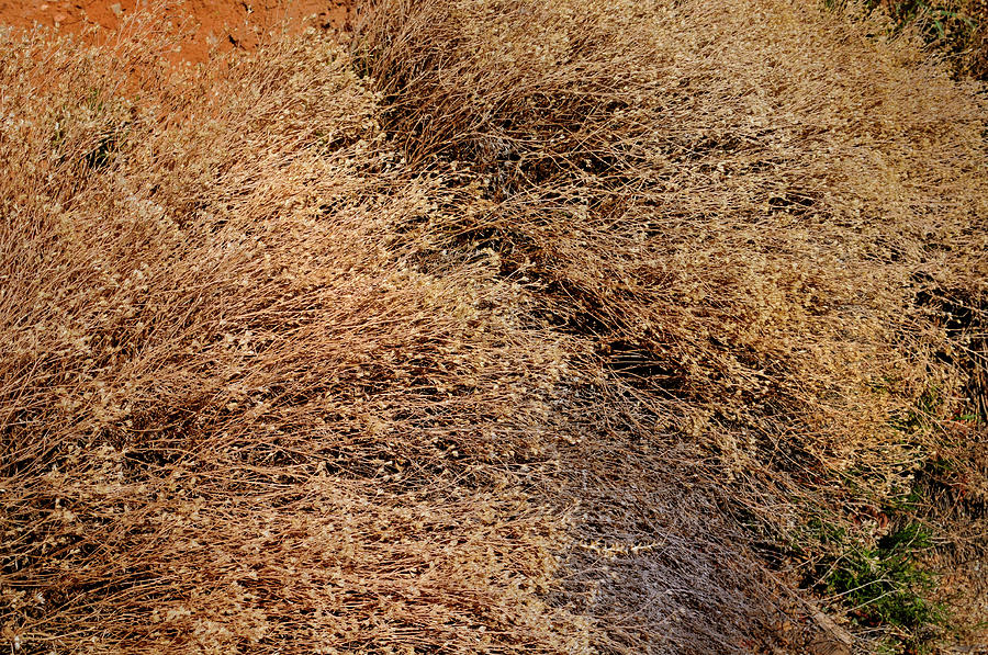 Landscape Photograph - Coyote Brush by Ron Cline