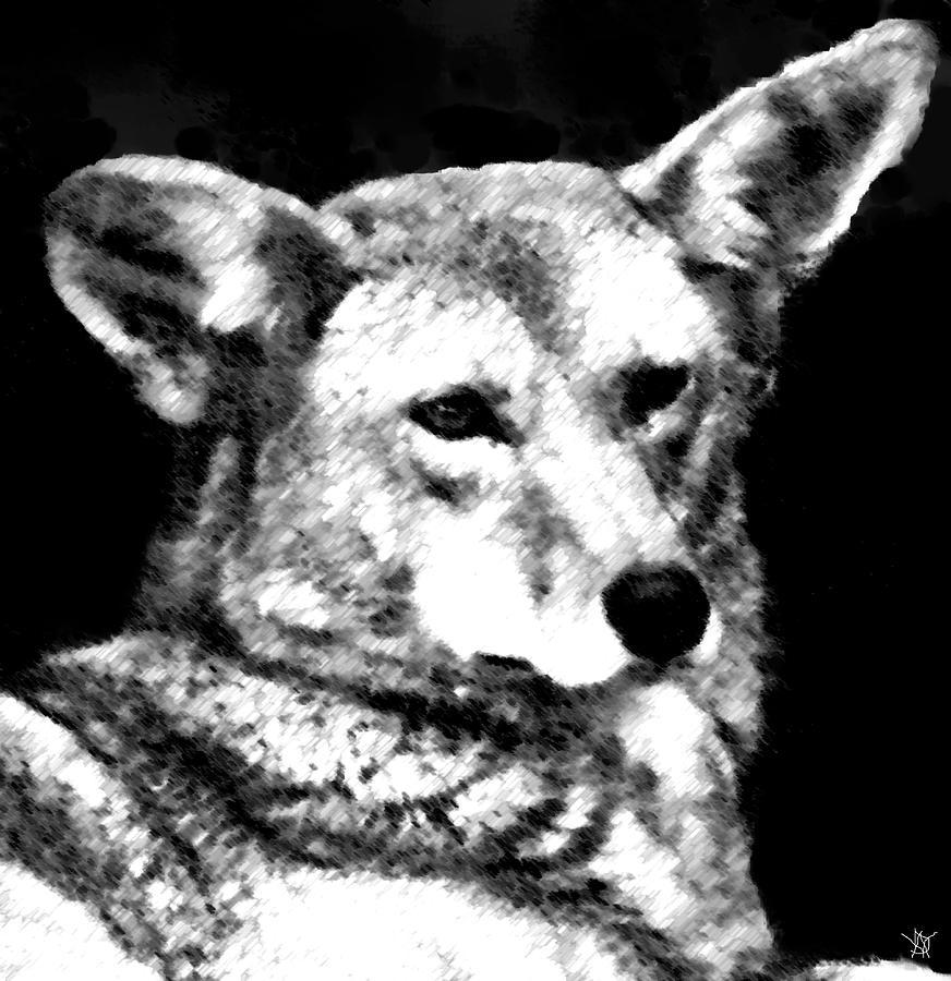 Animal Drawing - Coyote Charcoal by Debra     Vatalaro