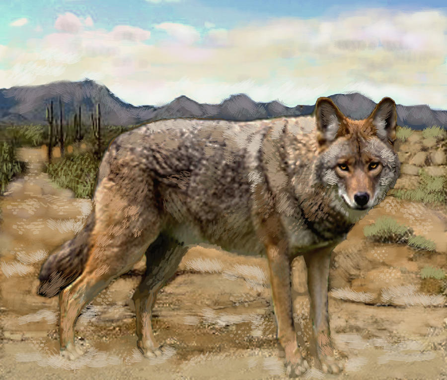 Coyote Digital Art by Jim Armstrong
