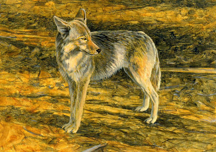 Coyote Painting - Coyote Sketch by Shari Erickson